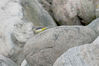 IMGB9375_wagtail_grey_on_stone-poor.jpg